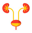 kidney and urinary bladder vector image