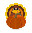 funny turkey peligrimm with a pumpkin for vector image