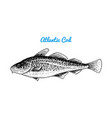 atlantic cod river and lake fish sea creatures vector image