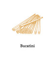 bucatini in hand vector image