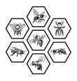set honey icons vector image vector image