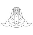 walrus coloriong page vector image vector image
