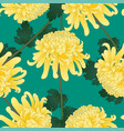yellow chrysanthemum flower on green teal vector image vector image
