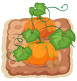 an isolated pumpkin farm vector image vector image