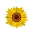 bright sunflower icon flat style vector image
