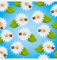 seamless pattern daisies flowers ladybug and vector image