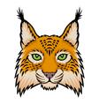 lynx head vector image vector image