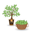 money tree with a coin root green cash banknotes vector image vector image