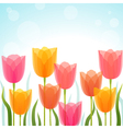 tulip background vector image