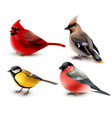 winter birds set vector image