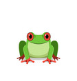red eye frog front view vector image vector image