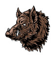 colorful vintage wild boar with tusks vector image vector image