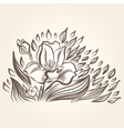 Drawing of beautiful narcissus flower vector image vector image