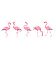 pink flamingos cute flamingo animal exotic nature vector image