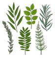 set of tree twigs branches with fresh green vector image vector image