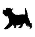 west highland white terrier vector image vector image