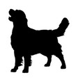golden retriever silhouette vector image vector image