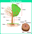 Leaning Parts of tree for kids Worksheet vector image vector image