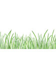 watercolor green grass vector image vector image