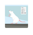 albino lab rat with red eyes in transparent vector image