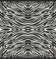 black and white zebra skin seamless pattern vector image