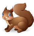 cartoon funny squirrel white background vector image