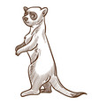 african suricate or meerkat isolated sketch vector image vector image