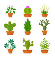 Decorative cactuses with flowers and home plant in