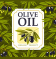 olive branches with oil drops black fruit leaves vector image