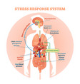 stress response system diagram vector image