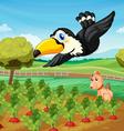 Toucan over farm vector image vector image