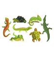 amphibian animals collection turtle chameleon