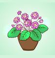 blooming pink flowers vector image vector image