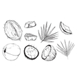 coconut on white background Isolated nuts vector image