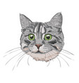 cute kitty head hand drawn vector image