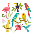 set of tropical birds vector image vector image