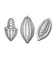 cocoa ink sketch vector image vector image