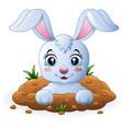 happy bunny cartoon in the hole vector image