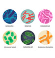 symbiotic human bacteria realistic set vector image