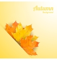 Autumn background with realistic maple leaves vector image