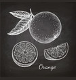 chalk sketch of orange vector image vector image