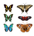 collection of various kinds of butterflies vector image