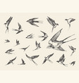 flock birds flying swallows drawn sketch vector image vector image