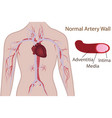 artery system in human body