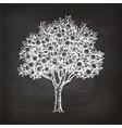 chalk sketch of orange tree vector image