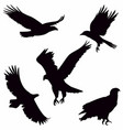 eagle silhouette on white background vector image