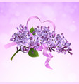 lilac branch with a pink satin ribbon vector image vector image