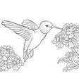 adult coloring bookpage a cute humming bird and vector image