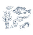 sea inhabitant for seafood restaurant vector image vector image