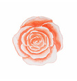 watercolor rose isolated on white background hand vector image